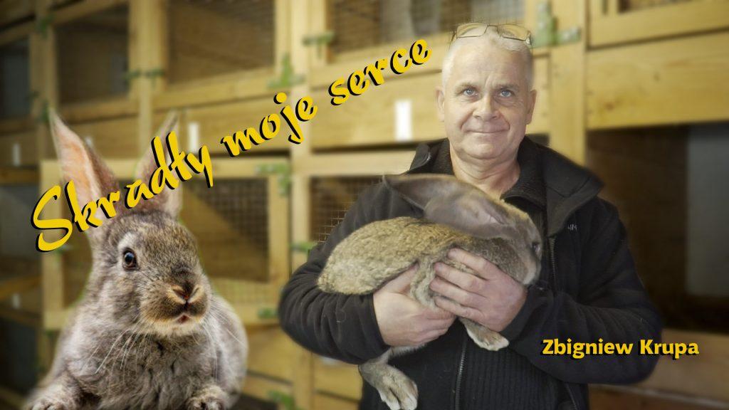 Zbigniew Krupa hodowca królików
